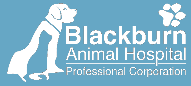 Blackburn Animal Hospital | Ottawa Ontario